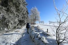 IMG_0230 (rudolf.brinkmoeller) Tags: eifel wandern natur eifelsteig hohesvenn