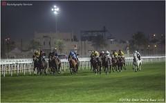 IMG_7166 copy (Services 33159455) Tags: qatar doha horse racing qrec emir horseracing raytohgraphy