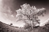 Le Pas-de-Calais en vision décalée (jeje62) Tags: digitalinfrared ir irshoot ir720 journy canon fisheye hautsdefrance infrared infrared715nm infrarouge landscape pasdecalais samyang samyang8mm