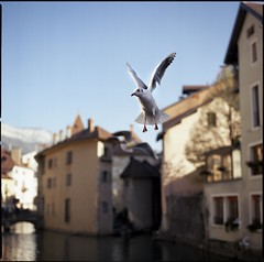img068 (Jurgen Estanislao) Tags: jurgen estanislao annecy france street photography color birds hasselblad 500 cm carl zeiss planar t 80mm f28 kodak ektar 100
