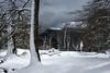 Un poco de todo (Begoña Fernández) Tags: snow elurra nieve autumn otoño udazkena gorbeialdea gorbeia murua hayedo pagadia beechwood araba egillolarra gorbea zigoitia chubasco zaparrada shower