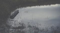 PB_012618_22 (losing.today) Tags: brianyoung oregon pacificnorthwest portland pdx portlandoregon portlandor winter nature outdoors naturepark plantlife plants moodyseason darkseason losingtoday