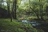 Ribadeo (Victoria Durán | Photography) Tags: ribadeo galicia galiza españa naturaleza agua rio bosque