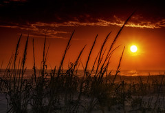 Sunset Over the Dunes (Charles Patrick Ewing) Tags: landscape landscapes sunset sunsets dunes sand beach sun sky skies cloud clouds red yellow nature natural outdoor night lowlight vista trees art artistic beautiful dark best new all everything florida sea ocean bay gulf water grass tree