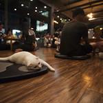 Chiang Mai cats and humans thumbnail
