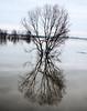 Hoogwater 2018 3 (megegj)) Tags: gert hoogwater flood