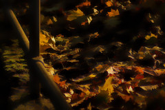 Fallen (Sarah Fraser63) Tags: leaves autumn autumnleaves gold light colour nature seasons outside