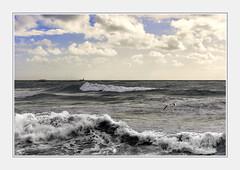 - DSC_3Il (Ferruccio Jochler) Tags: mareggiata gabbiano ondata battigia ambiente acqua cielo nuvole