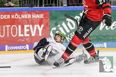 DEL2018-54.jpg (sushysan.de) Tags: bundesliga del deutscheeishockeyliga eishockey iserlohn iserlohnroosters kec köln kölnerhaie lanxessarena pix pixsportfotos roosters saison20172018 pixsportfotosde sushysan sushysande