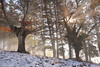 Winter Magic (Hector Prada) Tags: bosque invierno nieve niebla bruma hojas árbol luz sol mistico magic forest winter snow fog mist leaves tree light sun mystic spiritual paísvasco basquecountry