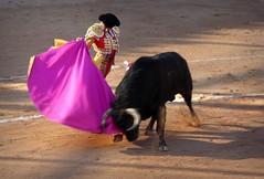 elegancia (aficion2012) Tags: istres france francia ponce enrique toros taureaux bull bullfight toro corrida tauromachie tauromaquia capote capa