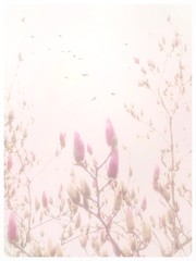 Spring fog. (jeanne.marie.) Tags: bright highkey iphoneography iphone7plus floweringtrees pastel fog buds magnolia pink spring