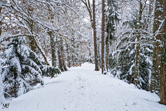 Parc de la Vallée DxOFP XT2 DSCF1126 (mich53 - thank you for your comments and 4M view) Tags: manteslaville france xf1655mmf28rlmwr xt2 paysage neige snow saisons 4winter winter nature hiver froid frost arbres trees