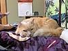 """Whose pillow?"" (sjrankin) Tags: japan hokkaido yubari bedroom blanket futon pillow hdr norio cat animal edited 14january2018"