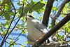 Perched (craigsanders429) Tags: arizonasonoradesertmuseum arizona tucsonarizona birds museum aviary leaves trees