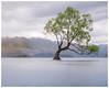 The tree (Pepyn Thysse) Tags: newzealand wanaka thatwanakatree tree longexposure otago landscape