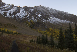 Pocaterra Ridge trail