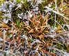 Orange leaves, green moss (Monceau) Tags: orange leaves green moss winter ground neighborhood maro