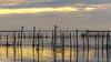 Hora de dormir (Francisco Chornet) Tags: albufera valencia aves gaviotas mornells landscape paisaje ocaso atardecer puestadesol comunidadvalenciana sony sonystas fe70200f4
