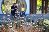 Approximately (Pedestrian Photographer) Tags: couple man woman fingers measurement chinese garden lake lagoon date length width yellow top explain ribbet