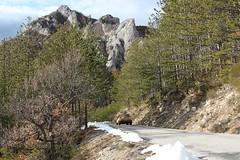 (Nico86*) Tags: rally rallye racing vintage vintageracing motorsport montecarlo rallyemontecarlo cars vintagecars alps frenchalps road