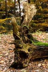 20171114-DSC06035 (Andreas BL) Tags: hagen hagensã¼d herbst landschaftfotografie laub natur outdoor