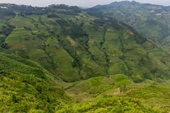 Terasy kam se podíváš (zcesty) Tags: vietnam23 terasa rýže pole krajina hory vietnam dosvěta hàgiang vn