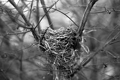 Swirling Nest. (Austin Beeman) Tags: 2013 canon85mmf18 ilforddelta100 canoneos650 ohio 35mmfilm blackwhitefilm www52rollsnet