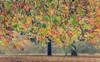 November Night... (Coisroux) Tags: autumn auburn leaves hydepark cityparks seasons memories romantic branches trees poetic light d5500 nikond londonparks walks luminance luminescence golden fallen 7dwf