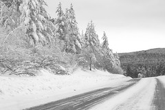 Siberian Roadway (Lyle Nel) Tags: winter trees white snow forest pine siberia russia baikal road roadway ice cold fairy soft feather blackandwhite frost nature bnw hill frozen natur