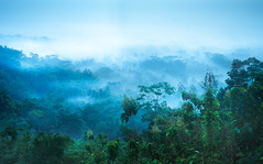Foggy Valley (pramuditalina) Tags: punthuksetumbu magelang middle jawa borobudurtemple rainyseason sunrise foggy misty valley hill gerejaayam tree forest