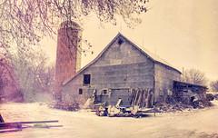 Endurance (Dave Linscheid) Tags: barn farm rural agriculture winter snow tree silo tinsidedbarn country topaztextureeffects watonwan county mn minnesota usa cold