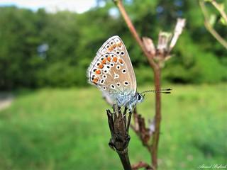Butterfly 1559