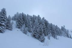 Champex-Lac (bulbocode909) Tags: valais suisse champexlac forêts arbres nature montagnes hiver neige brouillard stratus