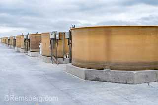 Row of fiberglass tanks containing oysters on gray day, Cambridge, Maryland.