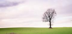 Tree.green (Beppe Rijs) Tags: deutschland germany schleswigholstein schlei wolken wolkendecke landschaft landscape natur nature field feld gras baum tree horizont horizon clouds line linie rural ländlich acker himmel sky wood holz green grün