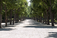 Le Jardin Henri Vinay (Américo Aperta) Tags: p1130692 américoaperta town village vila france frança f europe europa eu ue garden jardin jardim lejardinhenrivinay henrivinaygarden jardimhenrivinay trees árvores alley alameda raw panasonicdmcgf1