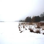 winter shades of white and maroon thumbnail