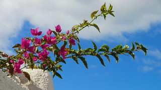 La Gomera (Spain's Canary Islands) - Flowers on the wall @ Playa de Santiago