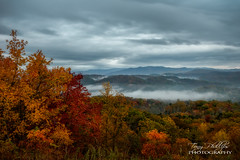 Foggy Foothills (Tony Phillips Photography) Tags: foothillsparkway greatsmokymountainsnationalpark tennessee autumn fall fallcolor fog foggy landscape mountains nature outdoors scenery
