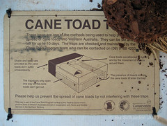 And now for something completely different: Cane toad trap (1 of 2), Keep River NP, WA (Su_G) Tags: canetoad australianwildlife noxiouspest indestructible toad trap canetoadtrap australia keeprivernationalpark westernaustralia keepriver nationalpark sug 2018 2008 oct2018
