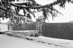 IMG_2018_02_28_00872 bn (gravalosantonio) Tags: jaca spain ciudadela huesca blancoynegro nieve invierno