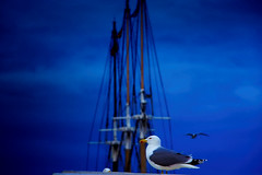 Hey! You know that I am shooting you! (Fnikos) Tags: port puerto porto sky cloud evening night nightview seagull boat sailboat outdoor