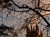 Autumn Afternoon 🍁 (DCPhotography2000) Tags: autumn york beautiful nature urban bright nikon europe uk outdoors