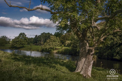 york sept 2017 (kapper22) Tags: outdoor sunny yorkshire scenic landscape trees river otters leaves green blue clouds fluffy