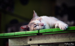 Time for that nap again (gunman47) Tags: 2017 asia bangkok christmas december east hup klong mae maeklong market railway rom samut siam songkhram south thai thailand afternoon animal cat nap pet sleeping sleepy ตลาดร่มหุบ แม่กลอง tambonmaeklong changwatsamutsongkhram