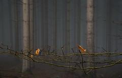 patterns (vd1966) Tags: stamm ast blatt nebel welk tree fog branch moody dark dunkel unheimlich