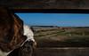 (PepaAston) Tags: dog window forest park wildlife preserve river delta llobregat beautiful views sheep