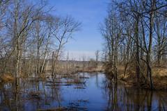Swamp Creek (BFru) Tags: swamp clouds blues wildlife refuge creek