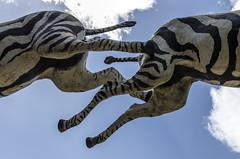 Cebras voladoras (Pedro Ruiz L) Tags: western cine hollywood cebras parque almería cinema zebras horses